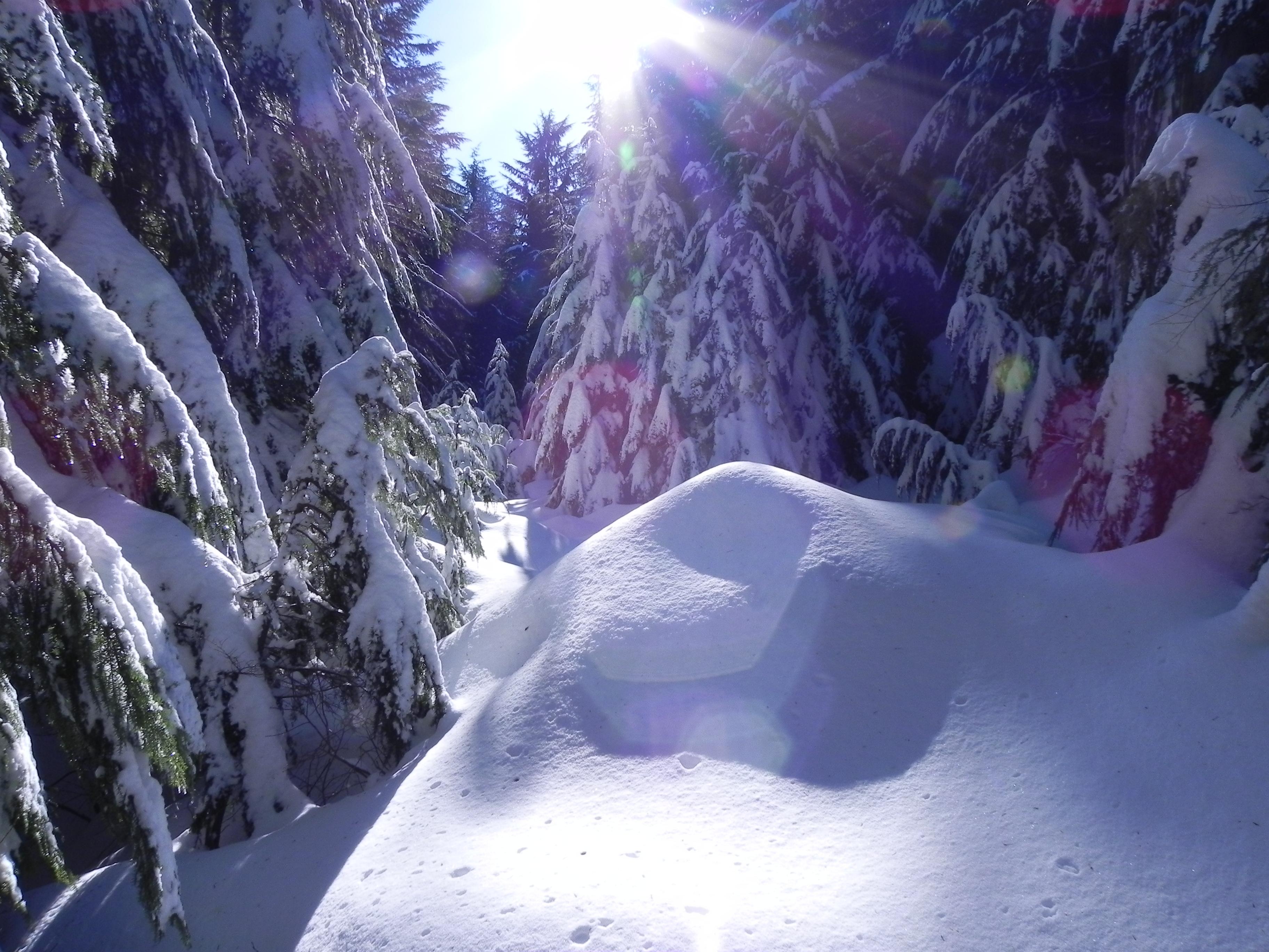 Sunshine on fresh snow